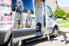dogs-jumping-in-van